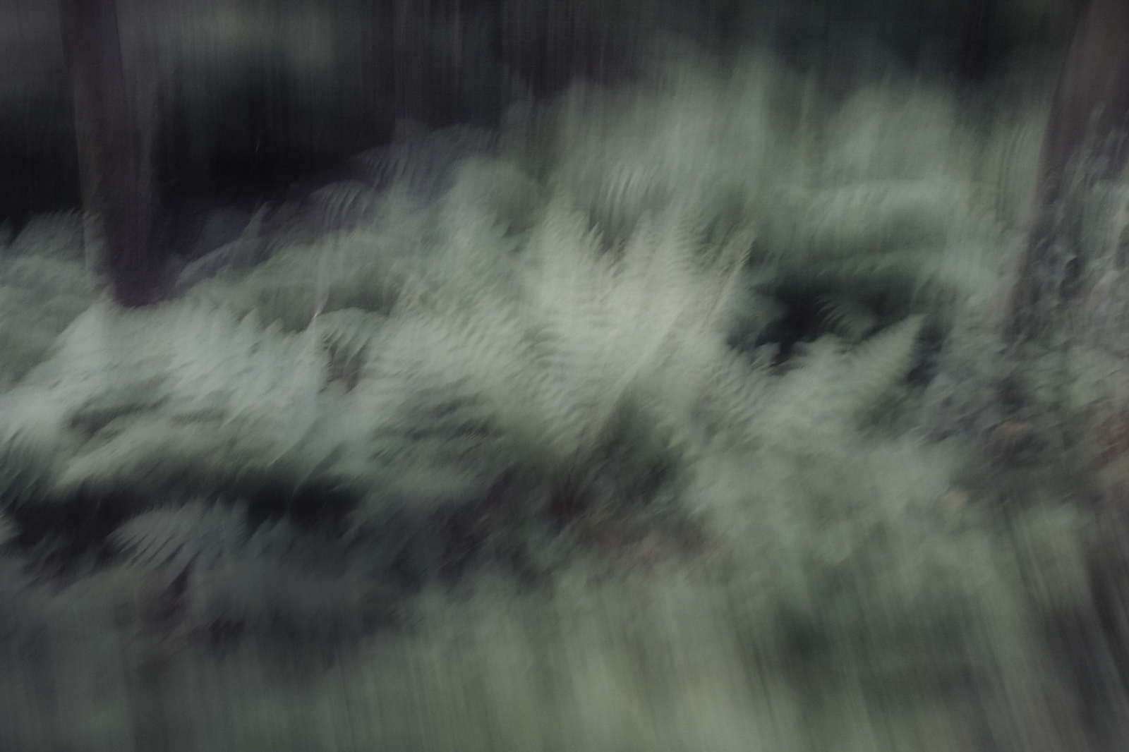 Motion-blurred ferns/bracken
