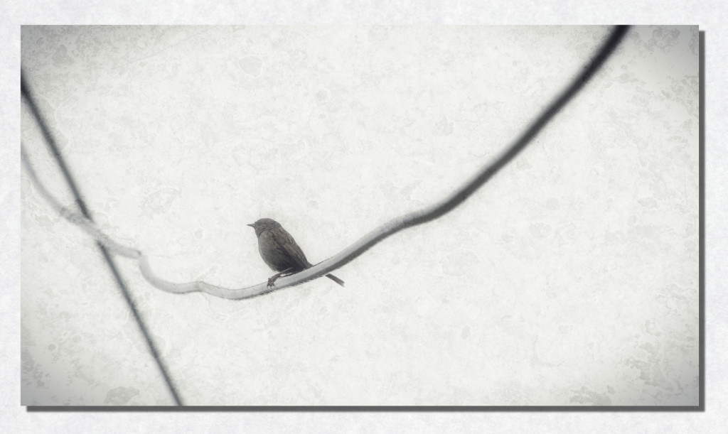 """Bird on a Wire"""