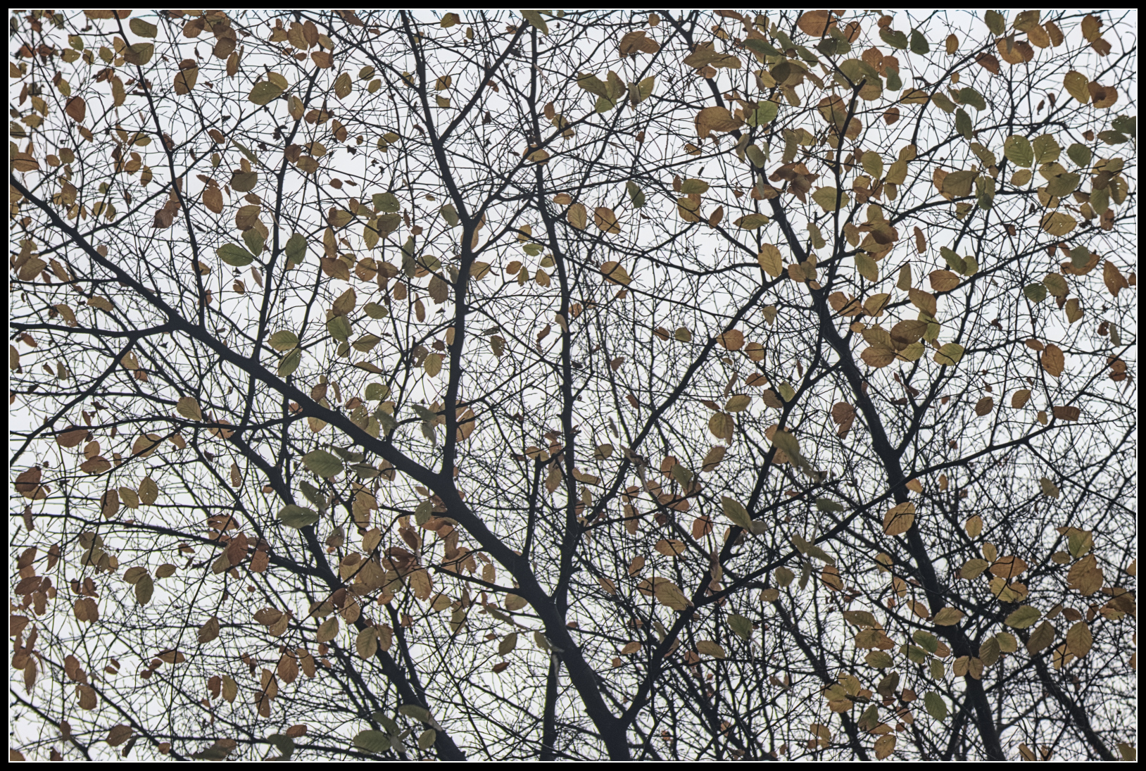 Abstract patterns of autumn leaves