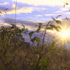 Wistful: brambles and lens-flare