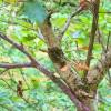 Young: beech sapling