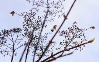 Pattern of branches and dead leaves