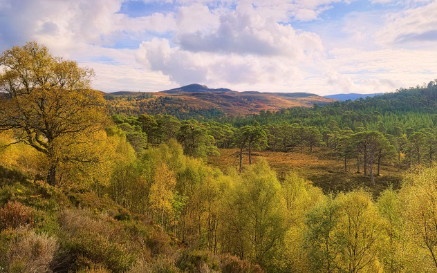 Caledonian Forest, Glen Affric