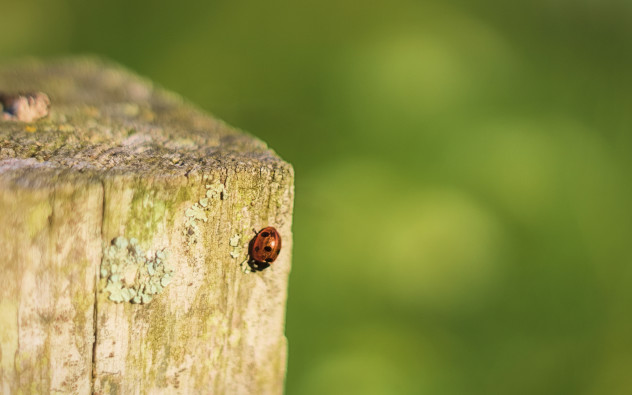A little ladybird on a fencepost.