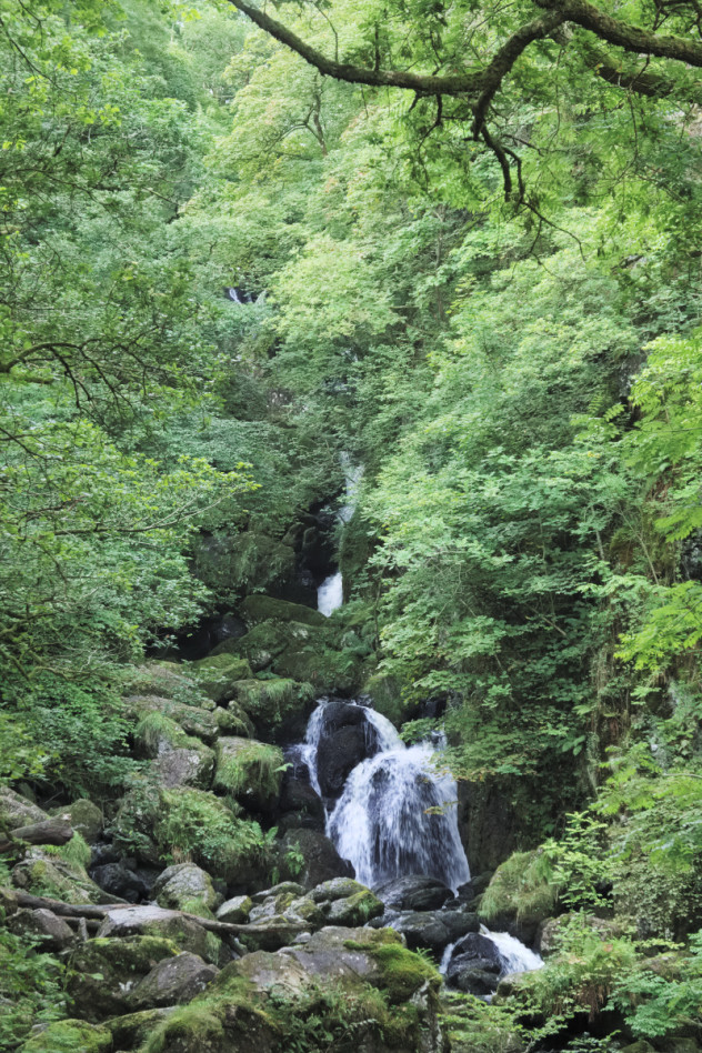 Lodore Falls  Rockery and a mass of green foliage at the foot of the Lodore Falls