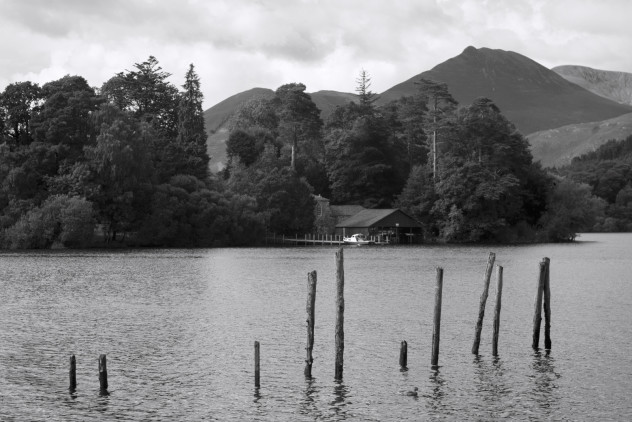 A duck swimming around wooden posts, the remains of a landing jetty opposite Catbells, Derwentwater.