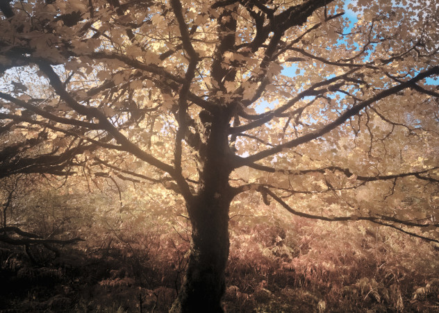 There are *loads* of sycamore trees around the estate, but this one caught my eye - and the late morning sun.