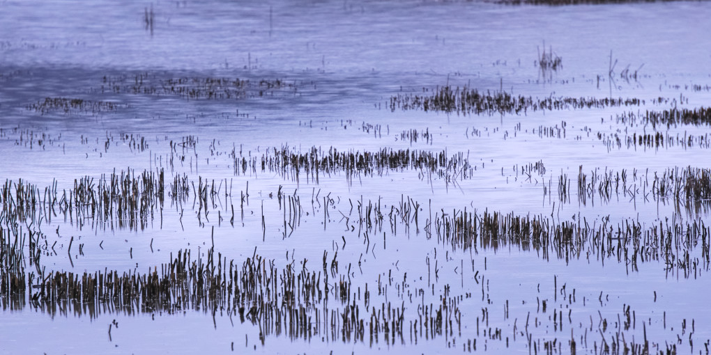 A semi-abstract view; stalks of grass submerged in a flooded field, Bridge of Earn.  I liked the way the sky reflected in silvery blue off the water, in a pattern flowing around the protruding clumps of grass.