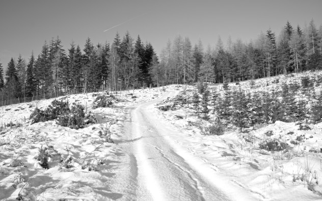 Someone's been this way before, and it wasn't just me.  Thick snow-covered landscape, Birnam Hill.
