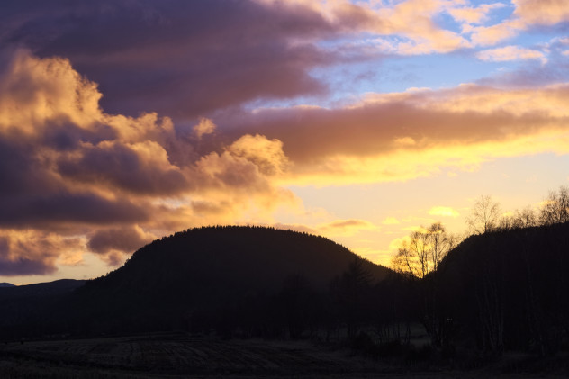 A small clump of trees silhouetted against a vibrant orange sky at sunset, between Aboyne and Ballater.