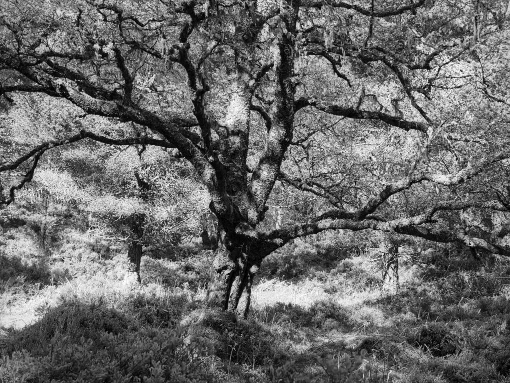 Taken on a stroll through my favourite forest, the Black Woods of Rannoch