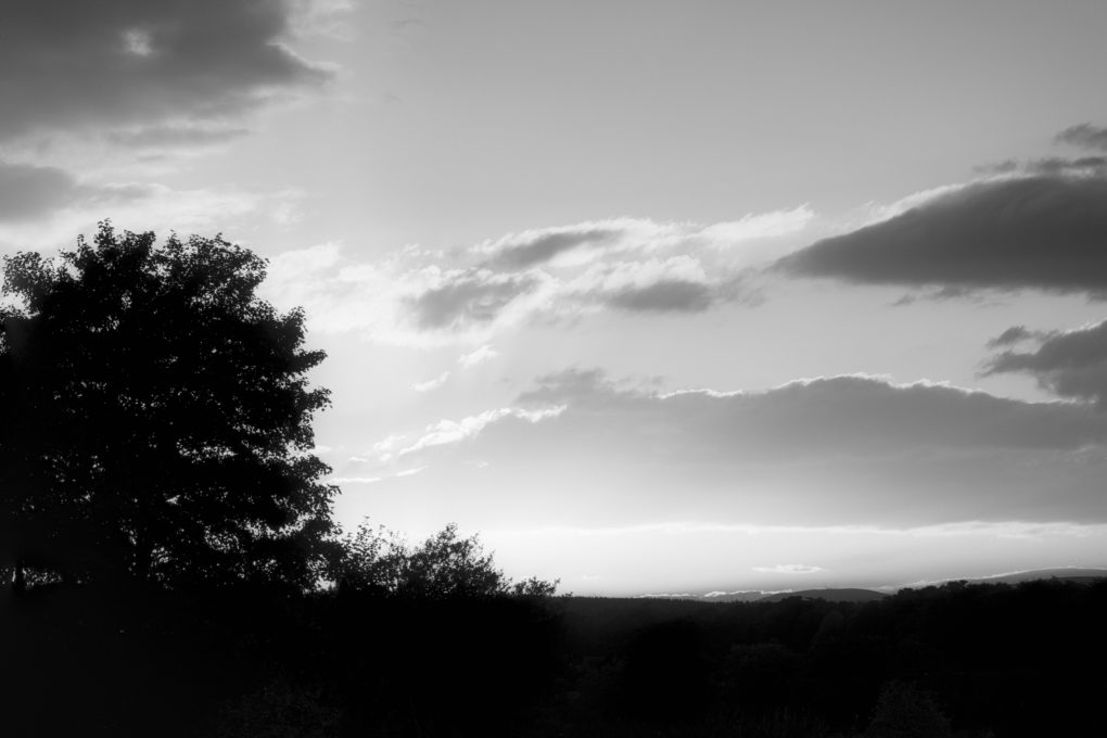 Tree silhouettes - evening light whilst walking the doglet.