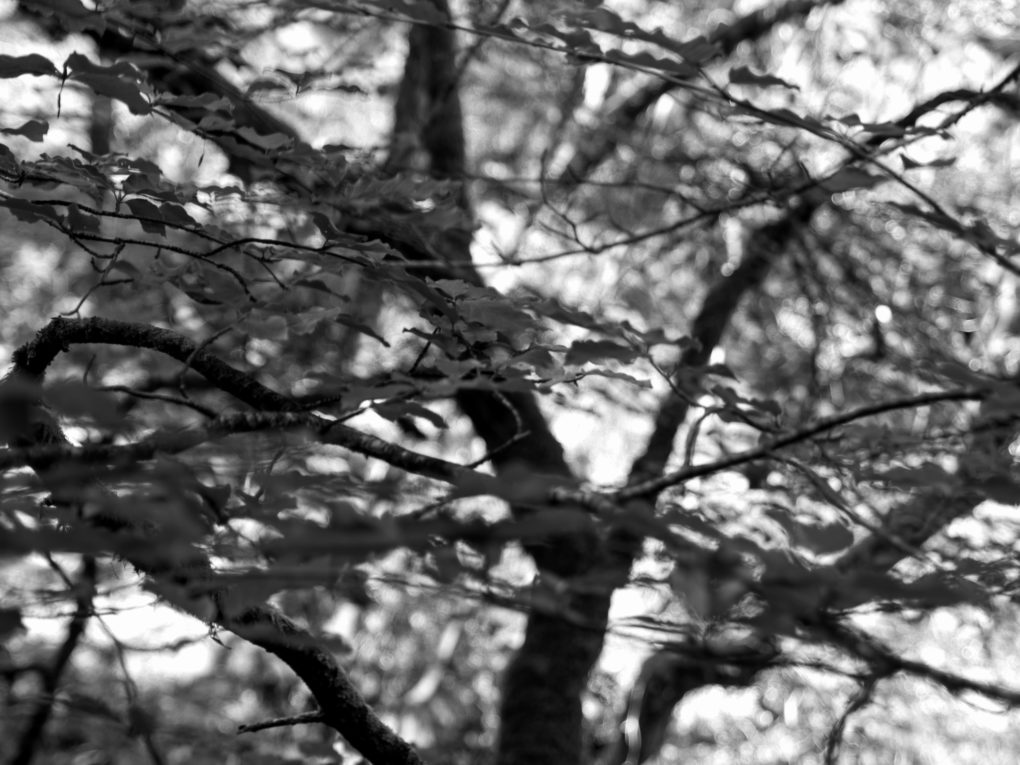 I looked up and the trees filled the viewfinder so I pushed the shutter button.