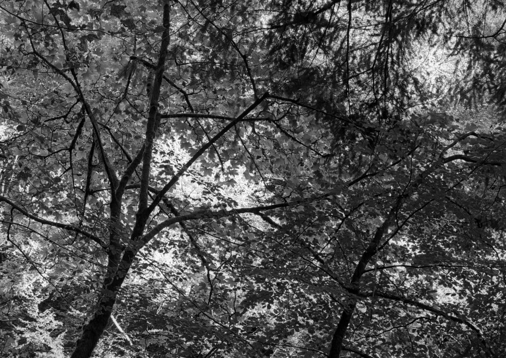 One of my favourite subjects - semi-abstract lines made by tree branches amongst the foliage, filling the frame