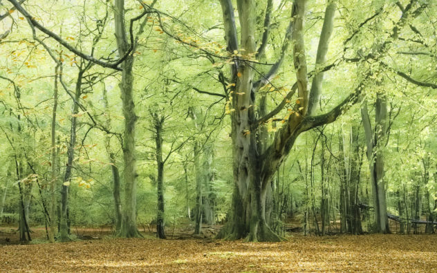 With its suffusion of green foliage and orange leaves, this woodland reminded me of the film _House of Flying Daggers_.