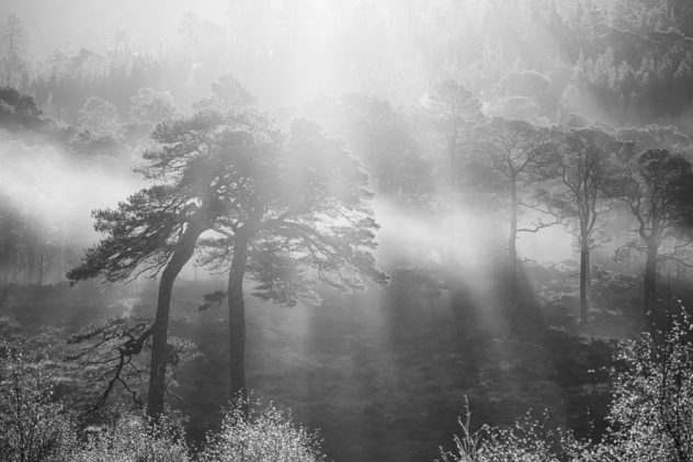 A perfect moment - bright morning sunlight blasting through glorious old Scots Pine trees casting their shadows on the mist.  A moment of drama yet ultimately of peace.