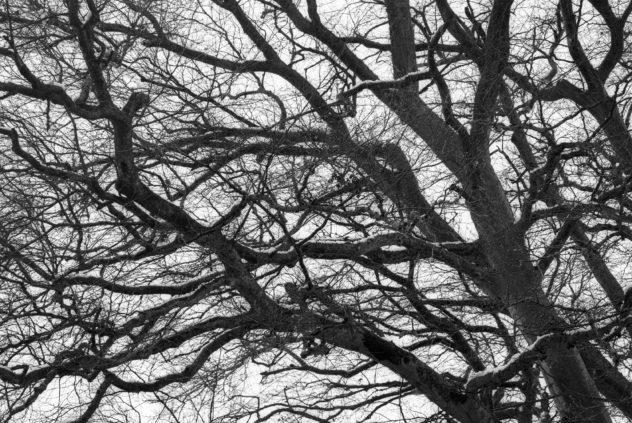 A proper-sized tree