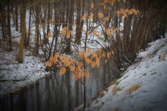 A nice stroll passing soggy orange leaves from last autumn by the side of the Ruthven Water, covered in the first real snow of winter