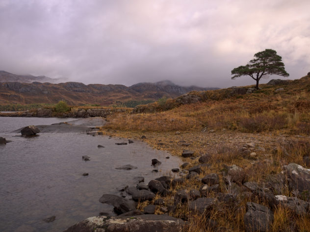 A tree on the rocky shores of Loch MareeI'd say there's Slioch in the distance, but the cloud gets in the way...