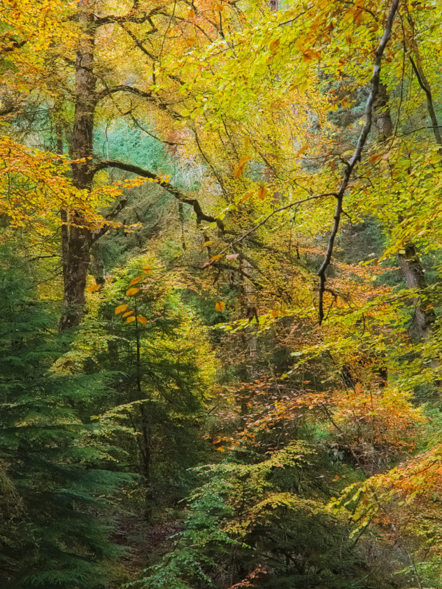 Beautiful forest colours - the Reelig Glen in autumn