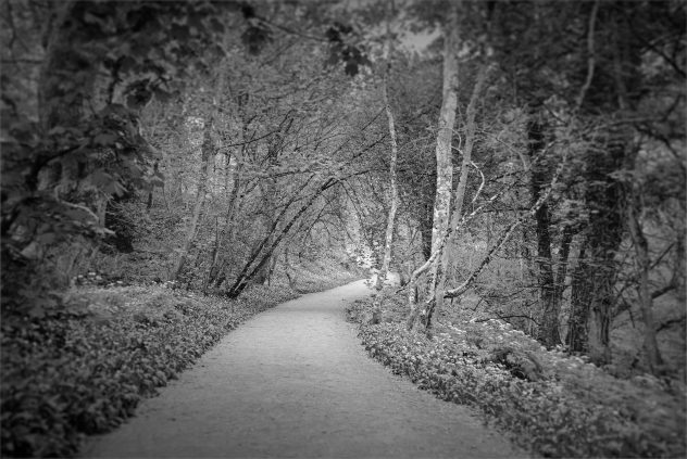There's something seductive about a tunnel of trees wending its way into the distance - even if the path is hardly subtle.