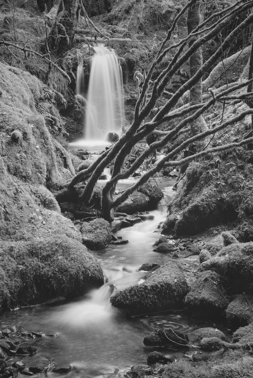 Rocks and trees and water and slippiness and moss and lichen and twigs and stones and wet stuff and...