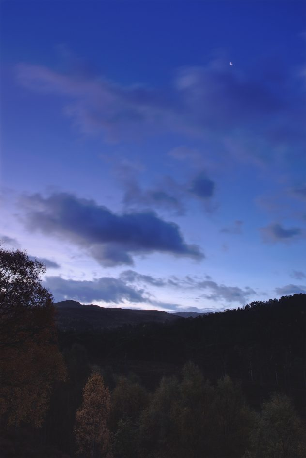 Transition time: the first light of the morning, barely hinting at the possibility of dawn on the horizon, with a crescent moon in the cobalt blue sky. All is dull, below, in the Caledonian Forest.