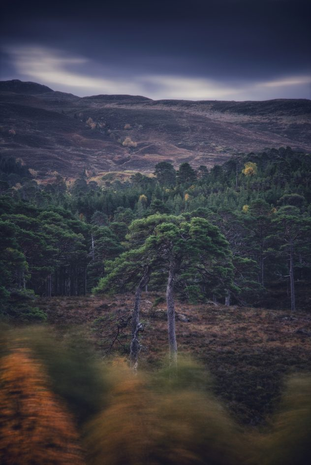 Two of my favourite old  gnarly crooked Scots Pine trees braving the elements in the Caledonian Forest, Glen Affric.
