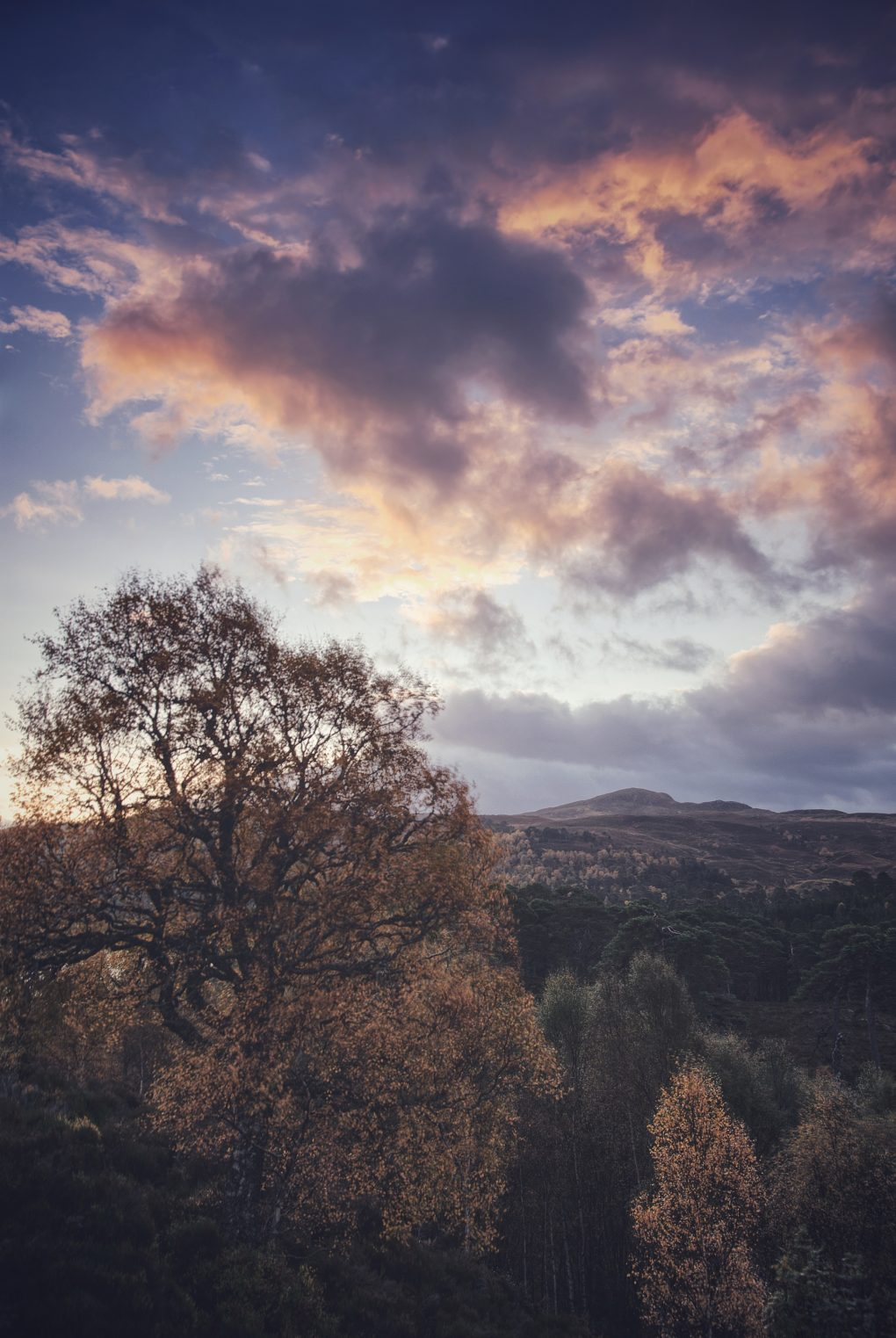 Vibrant orange and red tones as the first proper bright light of dawn illuminates clouds over the forest, Glen Affric.