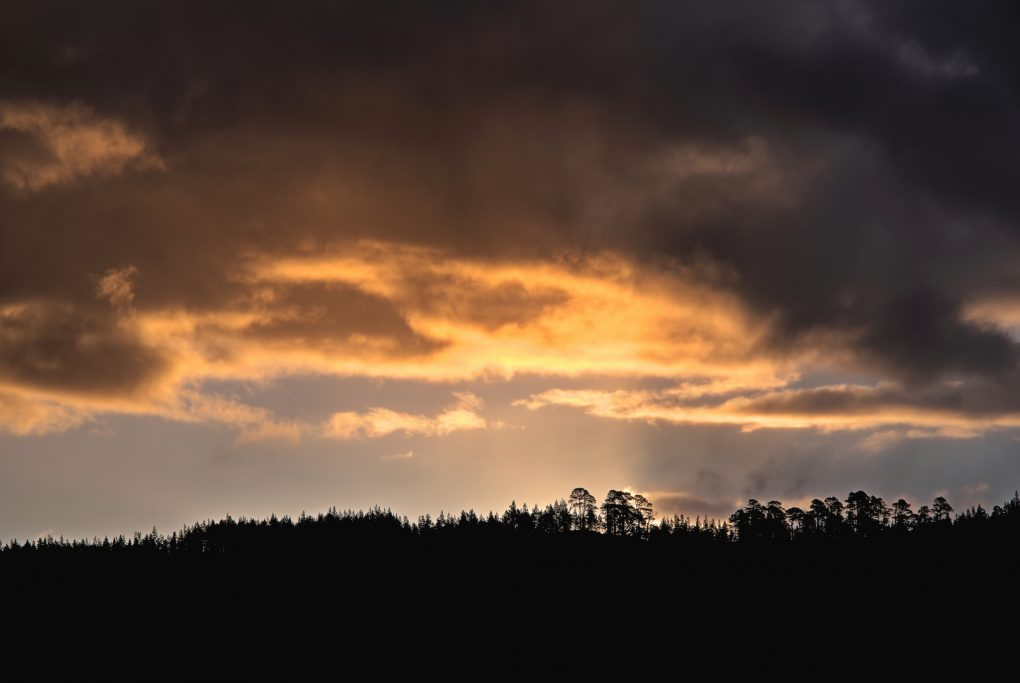 First hints of the sun rising behind distant hills, silhouetting trees small on the ridge