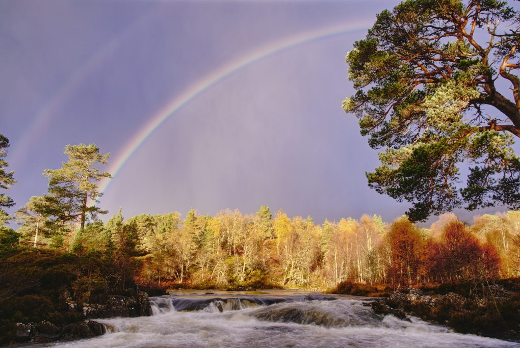 A stunning vibrant rainbow and secondary bow over the Caledonian Forest at Glen Affric, bright morning sunlight catching one of the Scots Pine trees and distant birches along the river.