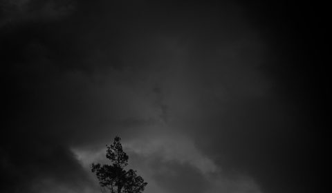 A solitary tree silhouetted against dramatic clouds