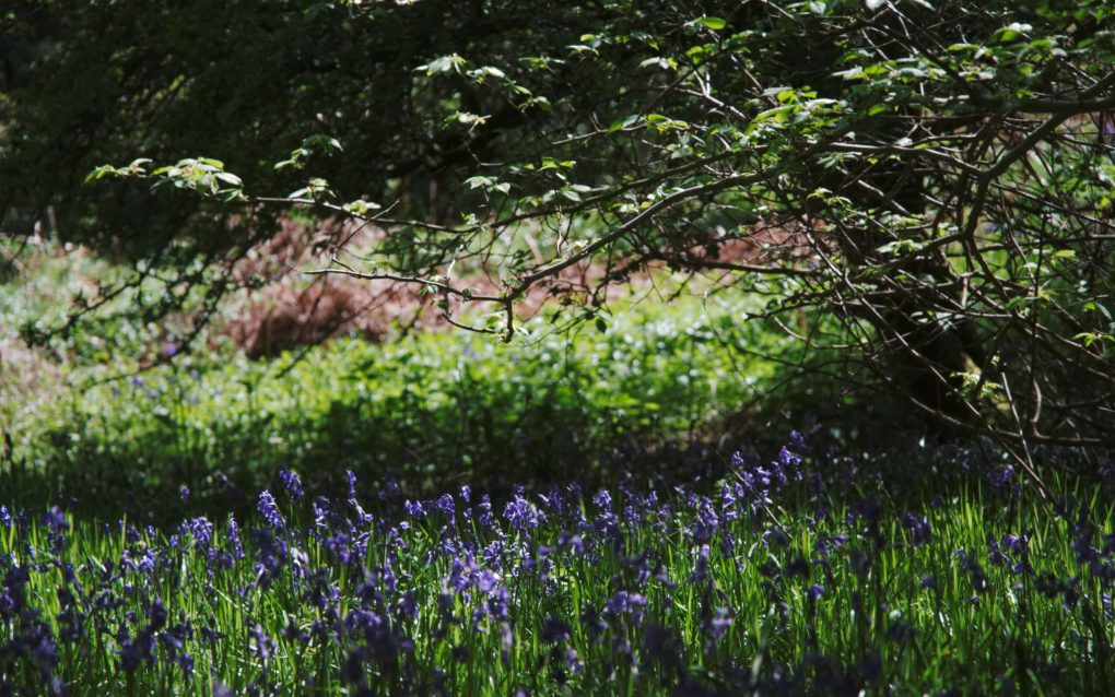 Shady undergrowth - dappled - light - relaxing greens and cool blues. A lovely way to recover in the woods.