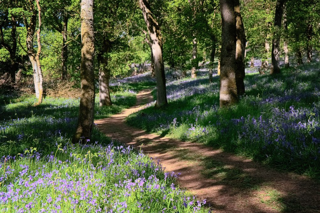 Having been introduced to the joys of Kinclaven on a photo-trip with two friends, I took the parents for a trek around Kinclaven bluebell woods.  Don't think I've ever seen so many bluebells (OK, maybe harebells?) before. Totally awesome, a lovely place to be in the dappled light under the trees.