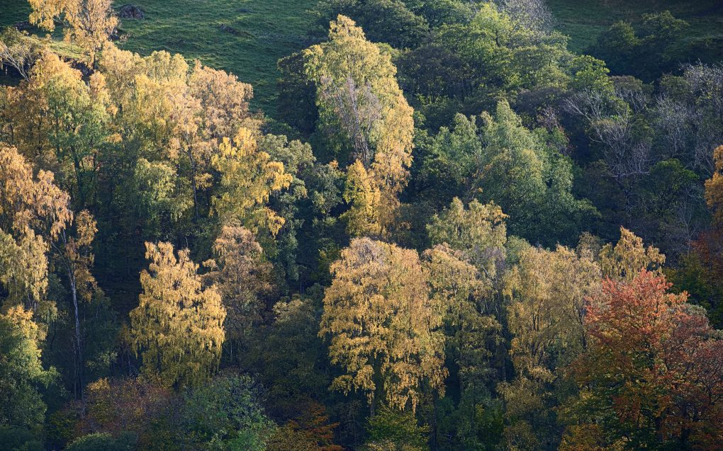 A mixture of trees, from mostly green to vibrant yellow and orange