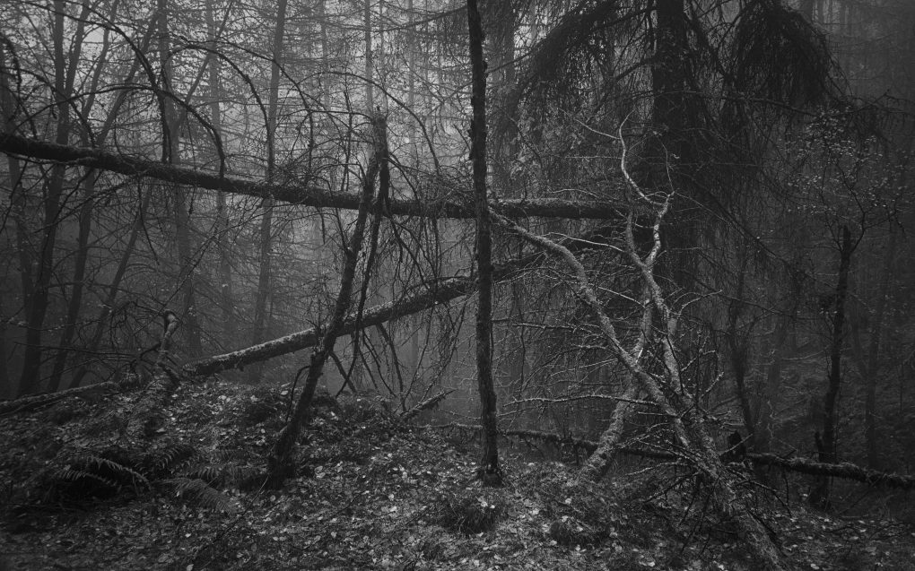 Low visibility - lines in the woods - lines in the mist.